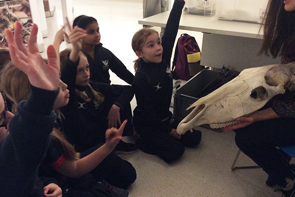 Year 4 visit the Museum of Zoology