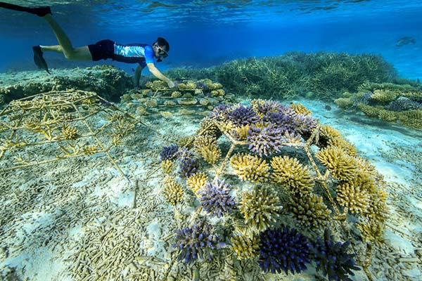 Rose leads the way to support the coral reefs